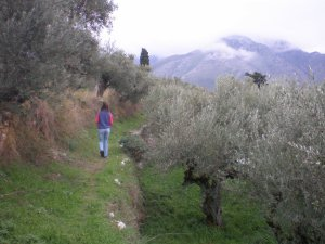 old village path through olives