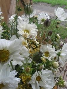 cosmos, fennel, astrantia, nigella pods