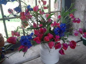 sweet pea 'Prince of York' and delphinium 'bellamosum'