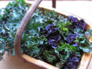 Brukale and Russian Kale in trug