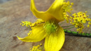clematis and fennel buttonhole