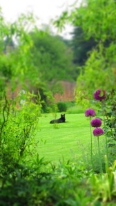 dog, alliums, wigglywillow