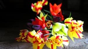 'flaming parrot' and other tulips