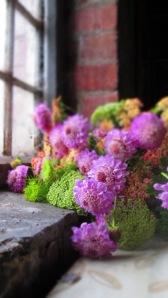 scabious on windowsill